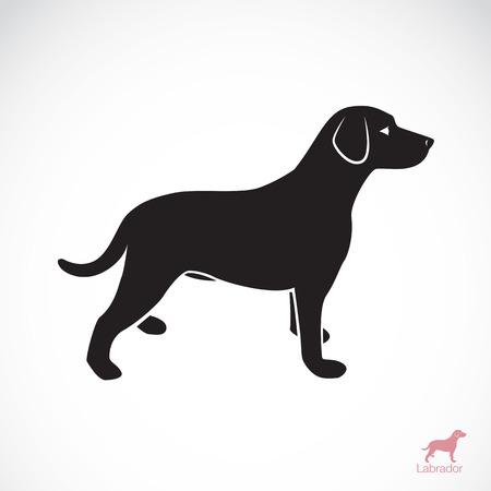 白い背景の上に犬のラブラドールのイメージ