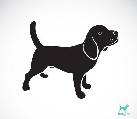 Vector de imagen de perro beagle en el fondo blanco