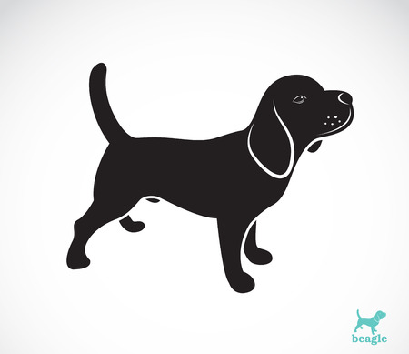 Vector image of beagle dog on white background Vector