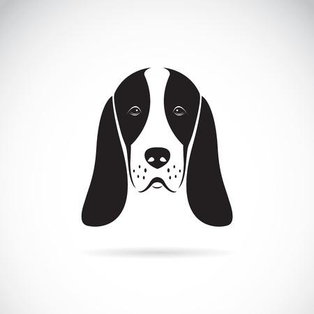basset hound head on white background