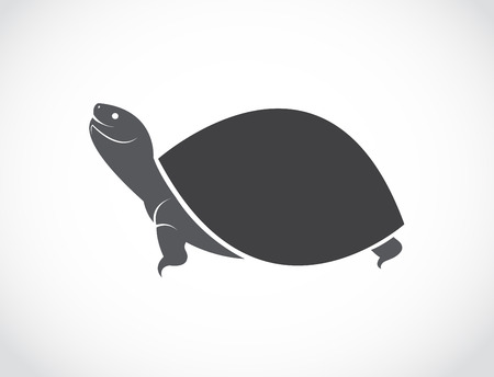 Vector image of an turtle design on white background Illustration