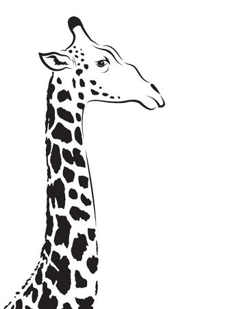 animales safari: Vector de imagen de una cabeza de jirafa en el fondo blanco