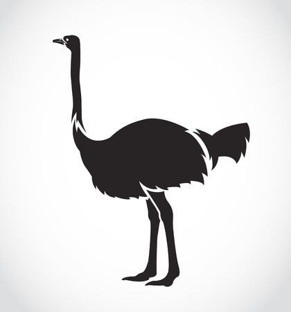emu bird: Vector image of an ostrich on white background Illustration