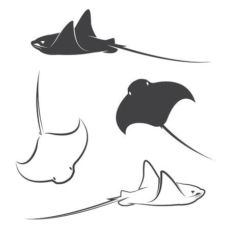 stingrays: Vector group of stingray on white background
