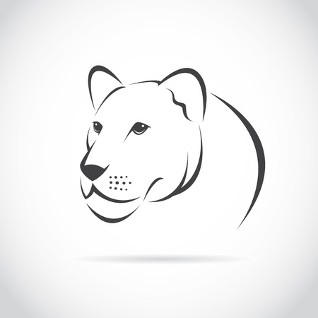 lioness: female lion head on white background Illustration