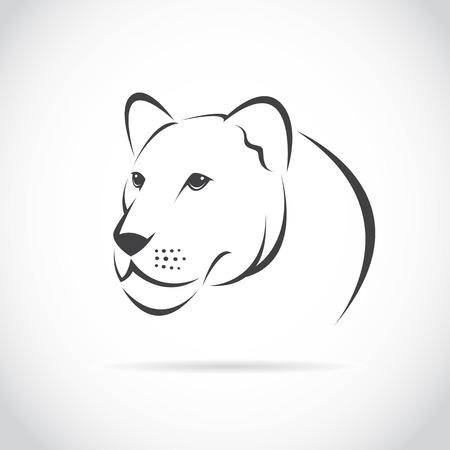 lioness: female lion head on white background Illustration