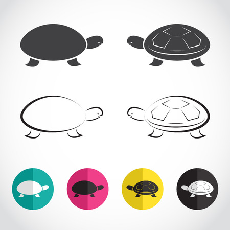 Vector group of turtle on white background Vector