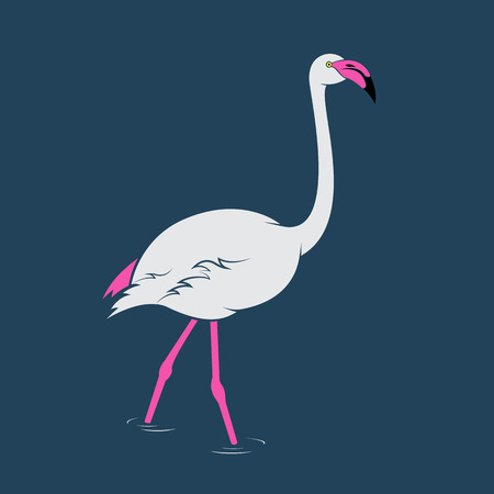 flamingos: Vector image of an flamingo on blue background Illustration