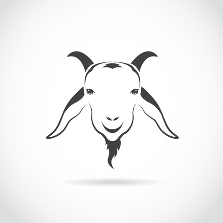 mountain goats: Vector image of an goat head on white background