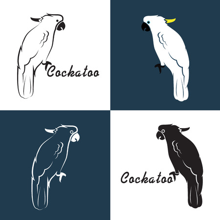 Vector image of an cockatoo on white background and blue. Vector