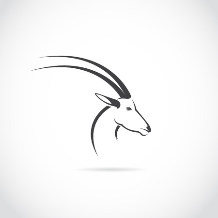 Vector image of an deer head (impala) on white background. Vector