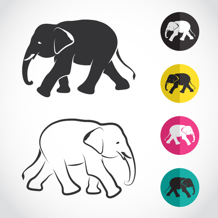 Vector image of an elephant on white background Vector