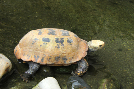 Picture of turtle in Chiang Mai Zoo, Thailand  photo