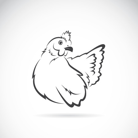 Vector image of chicken on white background Vector