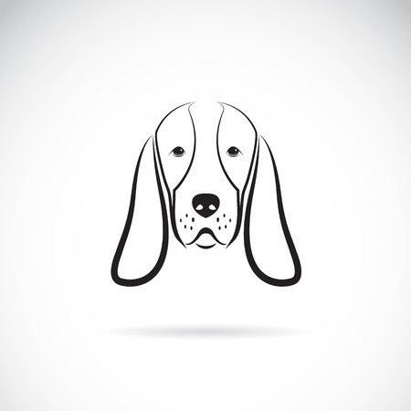 Vector image of a basset hound head on white background Illustration