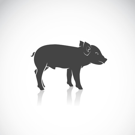 Vector image of a piglet on white background Vector