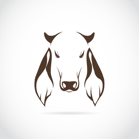brahman: Vector image of cow head on white background