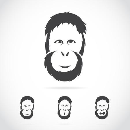 image of orangutan face on white background Illustration