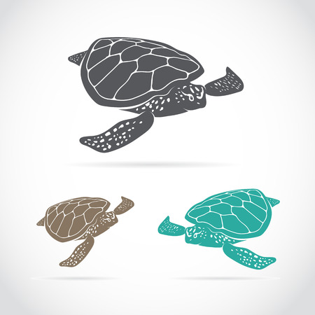 sea turtle: image of an turtle on white background Illustration