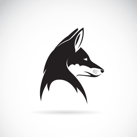 husky: Vector image of an fox head on white background Illustration