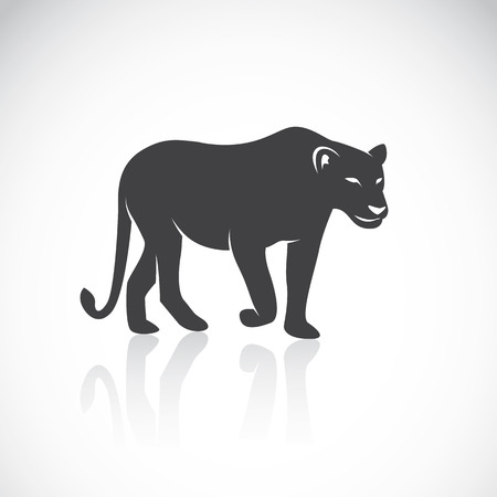 panthera: Vector image of an female lion on white background Illustration