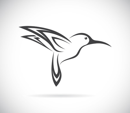 Vector image of an hummingbird design on white background Vettoriali