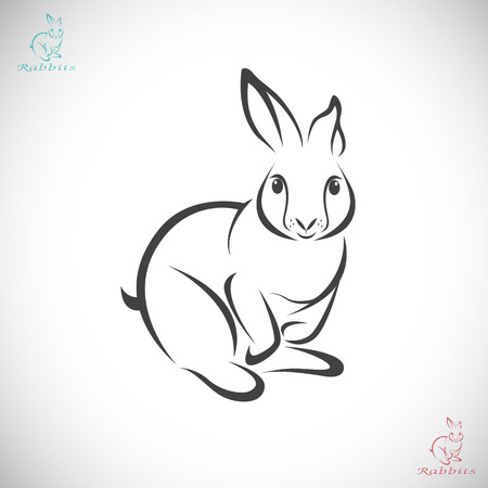 Vector image of an rabbit on white background