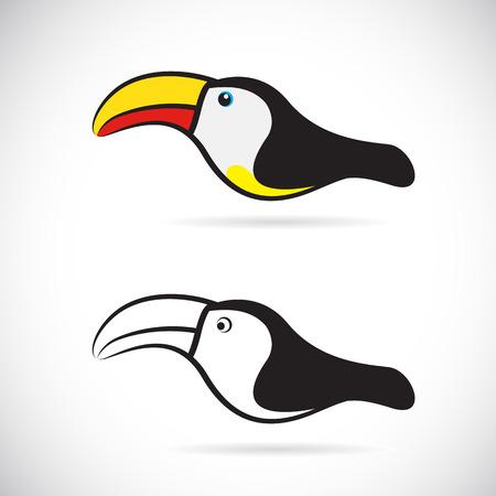 black beak: Vector images of hornbills on a white background.