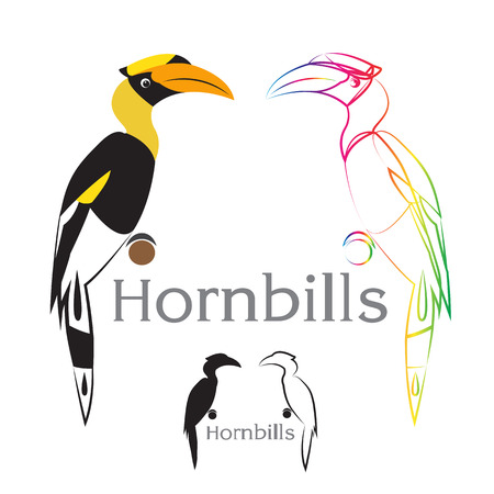 Vector image of an hornbill on a white background Vector