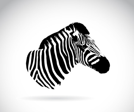 Vector image of an zebra head on white background Vector