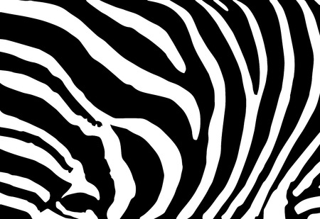 vector abstract skin texture of zebra print pattern Vector
