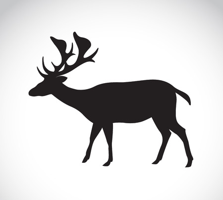 stag horn: Vector image of an deer on white background Illustration