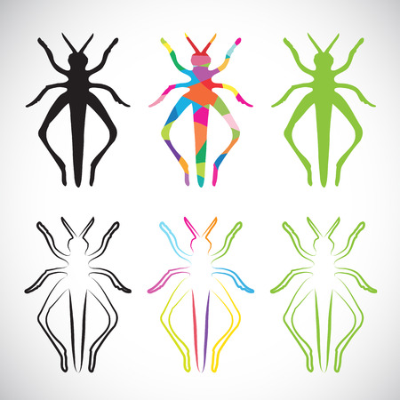 Vector image of an grasshoppers on white background Vector