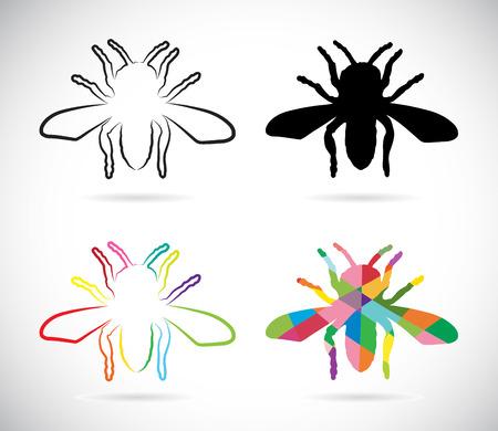 cigarra: Vector de imagen de un insecto sobre fondo blanco
