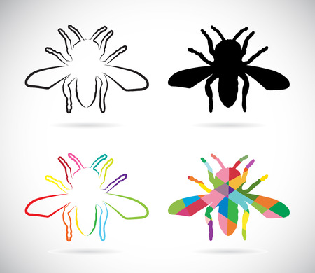 Vector image of an insects on white background Vector