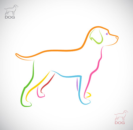 laboratory animal: Vector image of an dog labrador on white background