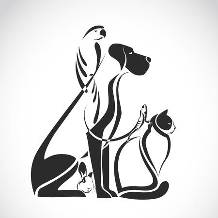 gato caricatura: Grupo de animales domésticos - perro, gato, pájaro, reptil, conejo, aislado en fondo blanco