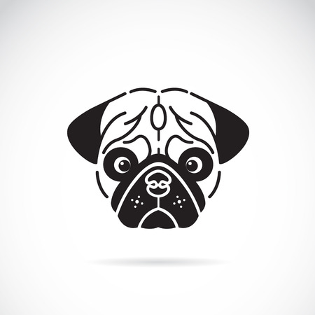 Vector image of pugs face on white background Vector