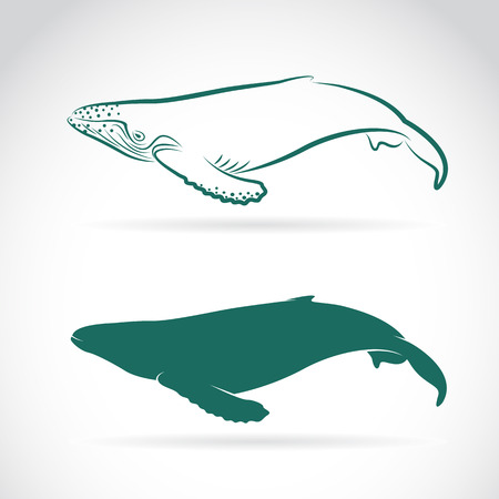 image of whale on white background Vector