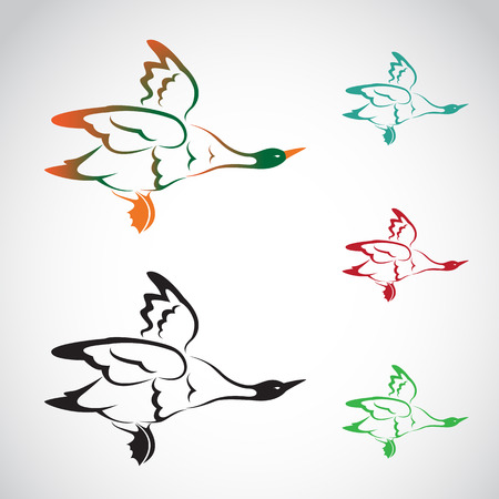 image of an flying wild duck on white background