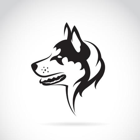 huskies: Vector de imagen de un perro husky siberiano en el fondo blanco