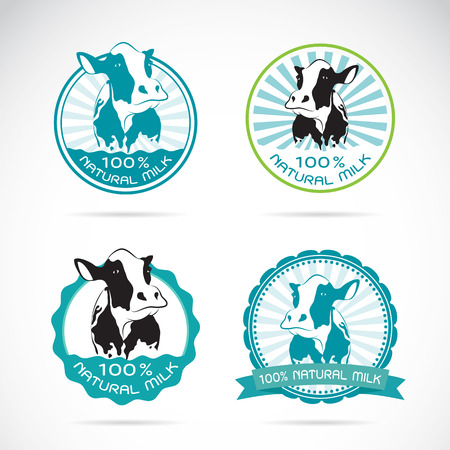 Set of vector an dairy cows label on white background Çizim