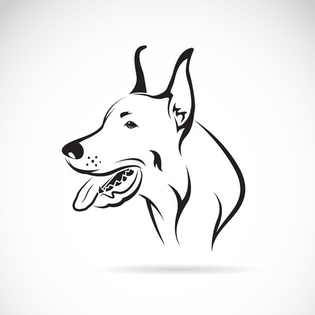doberman: Vector image of an dog (Great Dane) on white background