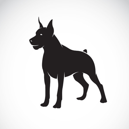 great dane: Vector image of an dog (Great Dane) on white background