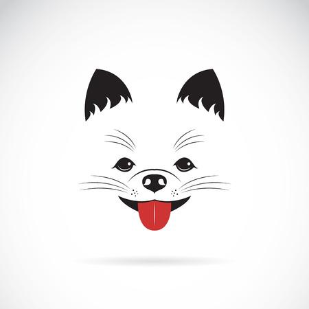 spitz: Vector image of an pomeranian dog on white background