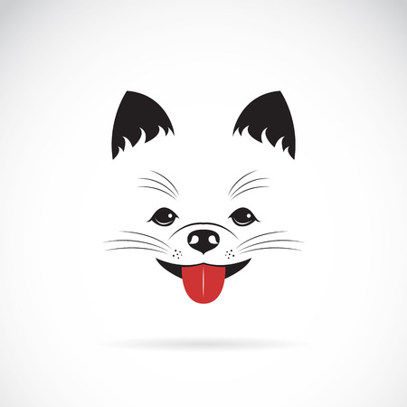 Vector image of an pomeranian dog on white background