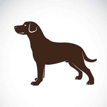白い背景の上に犬のラブラドールのベクトル画像  イラスト・ベクター素材