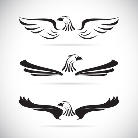 bird wings: Vector image of an eagle on white background