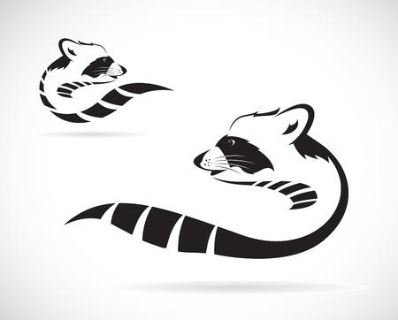 Vector beeld van een wasbeer op een witte achtergrond