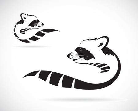 racoon: Vector image of a raccoon on white background